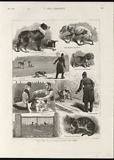 THE NEW POLICE REGULATIONS FOR DOGS THE GRAPHIC ANTIQUE PRINT ENGRAVING