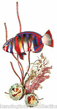 WALL ART - HARLEQUIN TUSK FISH WITH CORAL METAL WALL SCULPTURE - NAUTICAL DECOR
