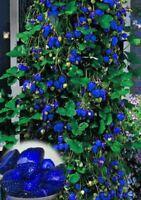 New Arrival Blue Climbing Strawberry tree rare Fruit Seeds For Home & Garden bon