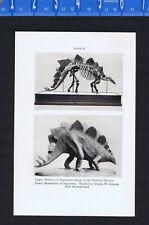 Stegosaurus & Duck-Billed Dinosaur -1934 Scientific Print