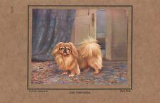 PEKINGESE OLD ANTIQUE 1920'S TIPPED IN DOG PRINT ARTIST  WARD BINKS