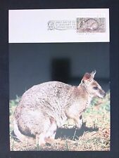 AUSTRALIA MK 1992 FAUNA TIERE ANIMALS PARMA WALLABY MAXIMUM CARD MC CM d1721