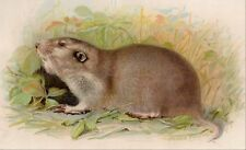 1892 original POCKET GOPHER Chromolithograph art print
