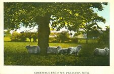 Mt.Pleasant,MI. A 1924 Sheep in the Meadow Greeting from Mt.Pleasant