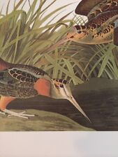 American Woodcock Audubon Bird Print Picture Poster Bookplate 171
