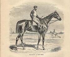 Stampa antica CAVALLO DA CORSA con FANTINO RACEHORSE 1891 Old antique print