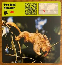 """Two-Toed Anteater, 1977 Editions Recontre 4 3/4"""" x 4 3/4"""" Card"""