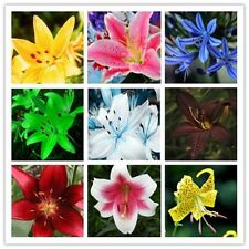 Perfume lily seeds Mixing different varieties 200pcs Lily Flower Garden Plant