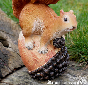 SQUIRREL ON NUT novelty home or garden ornament figurine Squirrel lover gift