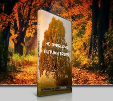 200 AUTUMN TREES DIGITAL PHOTOSHOP OVERLAYS BACKDROPS BACKGROUNDS PHOTOGRAPHY
