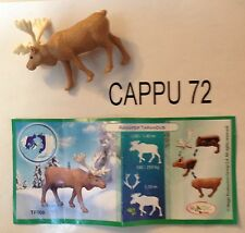 ANIMALI POLARI RENNA+CARTINA TR008 (scritte grandi)