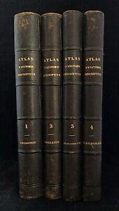 BONAMY & BEAU : ATLAS D'ANATOMIE DESCRIPTIVE DU CORPS HUMAIN . 4 VOL. MASSON, EO