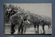 R&L Postcard: Fine Tuskers Elephants Ceylon Postage Stamp