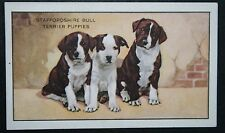Staffordshire Bull Terrier Puppies  Group   Original 1930's Vintage Card # VGC