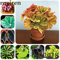 100 PCS Seeds Color Leaf Begonia Bonsai Flowers Plants Garden Perennial 2019 New