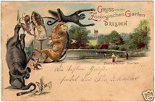 1906, CL, Gruss aus dem Zoologischen Garten Dresden, Elephant, Löwe, Giraffe