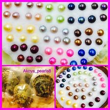 5 Oysters with Pearls~ 2 Black 1 Blue 1 Lavender 1 Hot Pink ~Pearl in Oyster~