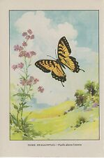 """1917 Vintage BUTTERFLIES """"TIGER SWALLOWTAIL"""" BUTTERFLY WOW! COLOR ART Lithograph"""
