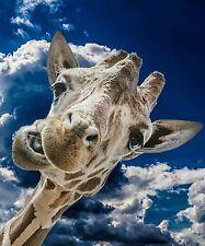 Giraffe~counted cross stitch pattern #2508~Animals Wildlife Nature Graph Chart