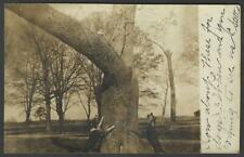 Real Photo Two Dogs With a Possum in a Tree Saint Michaels Md Rppc 1909