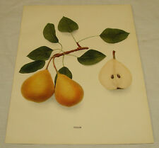 1921 Antique Print/TYSON/From Pears of New York, by Hedrick