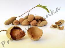 100+ Seeds Sweet Tamarind Tropical Seasonal Sweet Fruits Seeds BONSAI Non Gmo