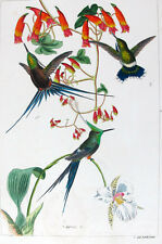 1857,REICHENBACH HUMMINGBIRDS FINE HAND COLOR ENGR. FOLIO U25