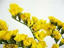 50+ Yellow Statice Flower Seeds / Long Lasting Annual / Great Gift