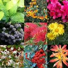Mixed Lot Of 30 Evergreen Shrubs In 9cm Pots - Good Selection Of Plants OFFER