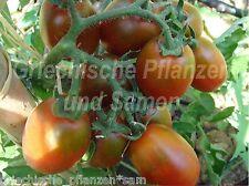 Russische Schwarze eiertomate TONDO Pomodoro Nero Tomaten 10 semi freschi