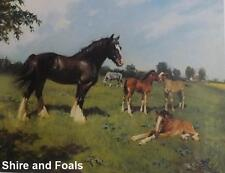 Cuneo Fine Arts - Stunning Aquestrian, Stamped print by Terence Cuneo
