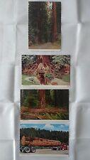 Vtg POSTCARD The Continental Card Lot of 4 Redwoods Postcards