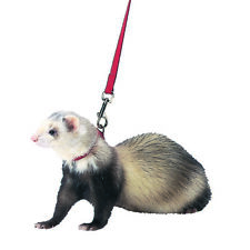 Marshall Pet Red Ferret Harness And Lead Combo 48 In 766501000047
