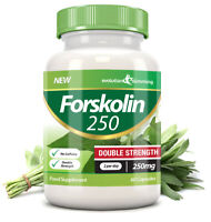 Forskolin 250 Double Strength 250mg 60 Weight Loss Capsules Evolution Slimming
