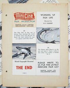 Minicine. 'Wonders of Fish Life' 13 Original story boards. Martin Lucas.