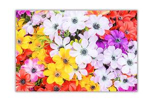 Beautiful Multi Coloured Wall Poster Prints Floral Pictures Landscape Décor