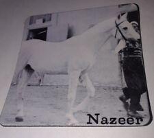 Small Horse MAGNET, NAZEER Gray Arabian Stallion Sire Mansour, Dam Bint Samiha