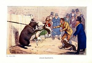 BEAR BAITING BY HENRY ALKEN VINTAGE 1903 COLOR PRINT ANGRY GAME BRUTE