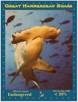 Seven Endangered Ocean Dwellers - 7 Postcards by PostcardsToSaveThePlanet.org