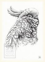 A4 | BLEISTIFT ZEICHNUNG KAKADU PAPAGEI COCKATOO DRAWING PENCIL BILD SANDRA MAHN