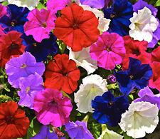 F1 Trailing Petunia Supercascade Mix Balcony - 12 Seedspetunia grandiflora
