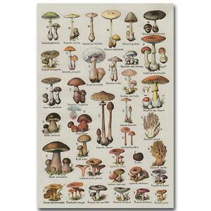 Mushroom Chart Biology Science Silk Poster 12x18 24x36 inch