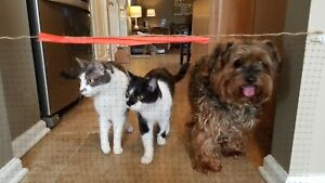 Simple Net - Pet Small Dog, Gate, Net, Barrier, Fence, Deterrent