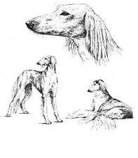 Saluki - 1963 Vintage Dog Print - Matted *