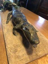 Präparat Krokodil Kaiman Alligator 115cm lang mit Cites Nachweis