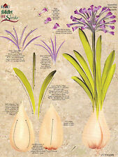 Agapanthus/Daffodil RTG Worksheet by Donna Dewberry