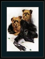 English Print Brussels Griffon Dog Dogs Puppy Puppies Art Vintage Poster Picture