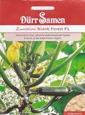 Zucchini Black Forest Neuheit Cucurbita pepo 5 Korn Dürr Samen
