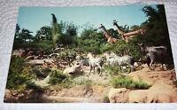 Disneyland Vintage African Veldt Postcard 1960s