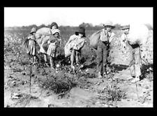 1913 Barefoot Boys Girls Children Picking Cotton PHOTO Texas Farm,Child Labor